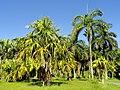 San Juan Botanical Garden - DSC06993.JPG