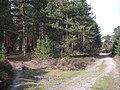 Sand, heather and pine. - geograph.org.uk - 397843.jpg