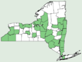 Saxifraga pensylvanica NY-dist-map.png
