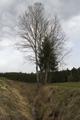 Schlitz Willofs Rimpers Wet Meadow Ditch.png