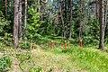 Sciklieva reserve (Belarus, June 2020) 04.jpg