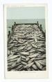 Scow Load of Salmon, Oregon (NYPL b12647398-66396).tiff