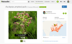 iNaturalist website screenshot with photo of a pink flower on left and details with a map on the right