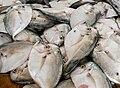 Selene vomer in Conejero market.jpg