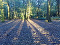 Shadows in Coldfall wood.jpg