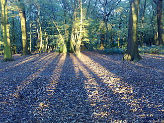 Coldfall Wood - Shadows in Coldfall Wood