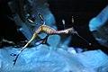 Shedd aquarium, Chicago, USA (2787452014).jpg