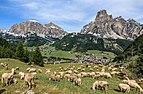 Sheep - Corvara.jpg