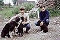 Sheepdog family, in Elwick - geograph.org.uk - 260745.jpg