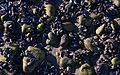 Shells and rocks (52310).jpg