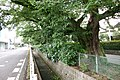Shinkawa(Ninomiya Irrigation) in Utsunomiya 06.jpg