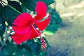 Shoe flower Point Pedro.jpg