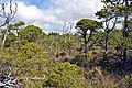 Shorepine Bog Trail, Pacific Rim National Park3.jpg