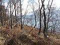 Shores of Loch Rannoch - geograph.org.uk - 376893.jpg