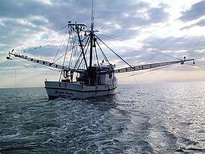 Shrimp fishery - Image: Shrimp trawler