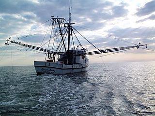 Shrimp fishery