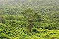 Sihanoukville Province - jungle.jpg