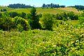 Silvan Ridge Winery in Eugene, Oregon. (27026663633).jpg