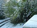 Snowstorm New Jersey October 2011 Number 8.jpg