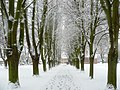 Snowy Avenue at Work - geograph.org.uk - 1155353.jpg