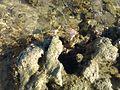 Sol, mar, coral e ouriço-do-mar. 01.jpg