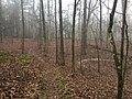 South Campus trails Oxford MS 2.jpg