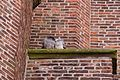 Spaarnwouderbuurt, Haarlem, Netherlands - panoramio (1).jpg
