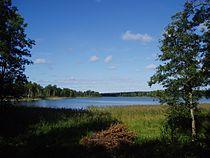 Sparren Norrtälje kommun.jpg