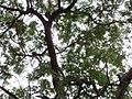 Spot The Parrot.JPG
