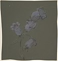 Spray of Canterbury Bells MET DP805173.jpg