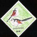 Stamp of Albania - 1968 - Colnect 312411 - Long Tailed Tit Aegithalos caudatus.jpeg