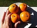 Starr-131204-2662-Citrus reticulata-Clementine fruit-Hawea Pl Olinda-Maui (25228262465).jpg