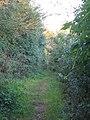 Stewards Green Lane, Coopersale Street (2) (geograph 4253926).jpg