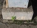 Streusalz -) Stahl -) Rost sprengt Beton -) Riss leitet Wasser zum Pflänzchen. - panoramio.jpg