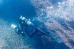 Submarinista con propulsor, isla de Corbera, Santander, España, 2019-08-15, DD 71.jpg