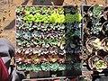 Succulent Variety Flat (20758149441).jpg