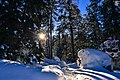 Sun In Snow Forest (24863431).jpeg