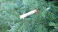 TFL Clothespin Ornament (4202799328).jpg