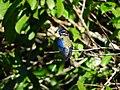 TNRP Bird Walk.jpg