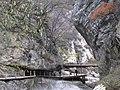 Tai Ping Forest Park 太平森林公园 (5248015947).jpg