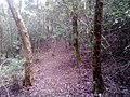 Tapete florido da floresta.jpg