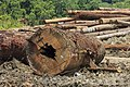 Tawau-District Sabah Logging-Camp-10.jpg