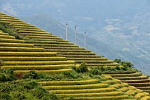 Fotografia de campos de arroz em socalcos em Sa Pa