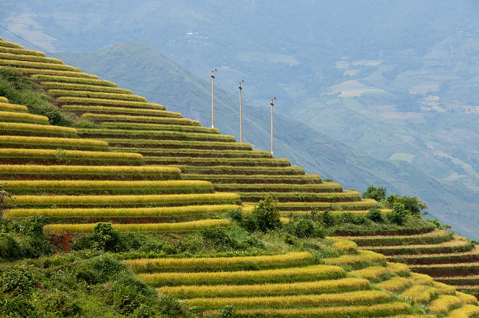 Terraced fields Sa Pa 3