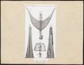 Testudinidae spec. - ingewanden - 1700-1880 - Print - Iconographia Zoologica - Special Collections University of Amsterdam - UBA01 IZ11600025.tif