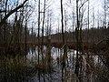 Teufelsbruch swamp next to crossing path in autumn 5.jpg