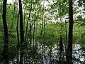 Teufelsbruch swamp next to crossing path in summer 1.jpg