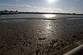 Thames barrier and thames mudflat gegenlicht 02.02.2012 15-41-53.JPG
