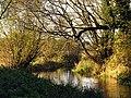 The Lambourn River at Elton Farm - geograph.org.uk - 74103.jpg