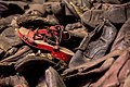 The Red Shoe Of Auschwitz (107596213).jpeg